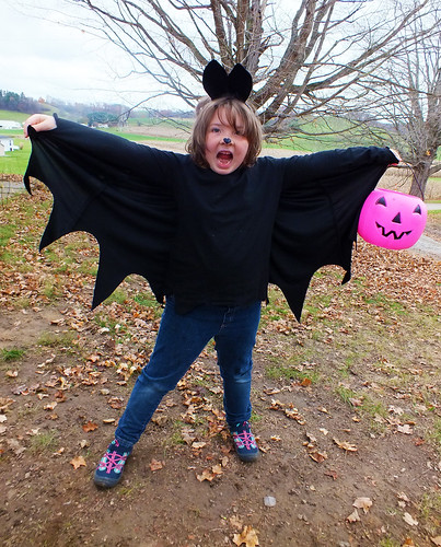 Lucy the Bat