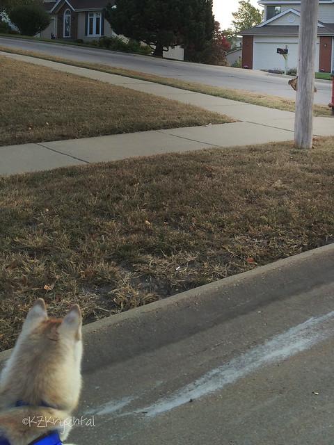 IMG_3464MagsSquirrel