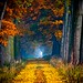 Allee by NPPhotographie