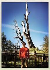 2015_11 塔塔加_夫妻樹 20
