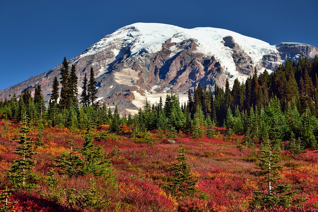 Autumn in Paradise (Mount Rainier National Park