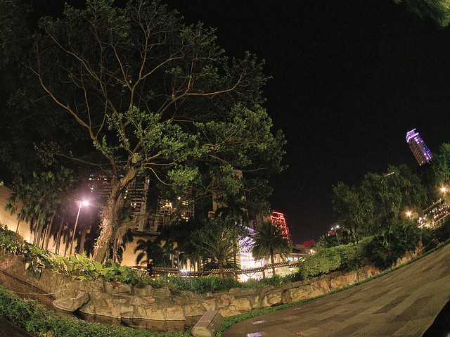 A Tree Amid The Urban Jungle