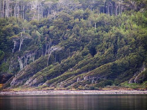 365×274_Bois en Patagonie