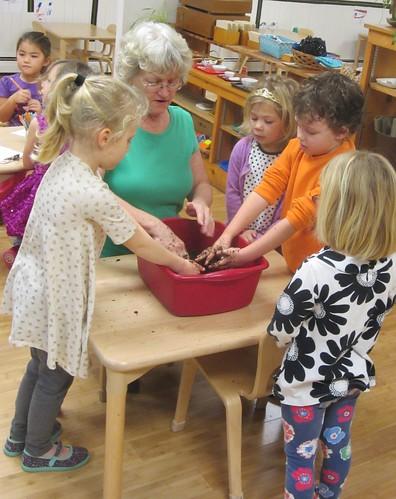 potting an amarylis