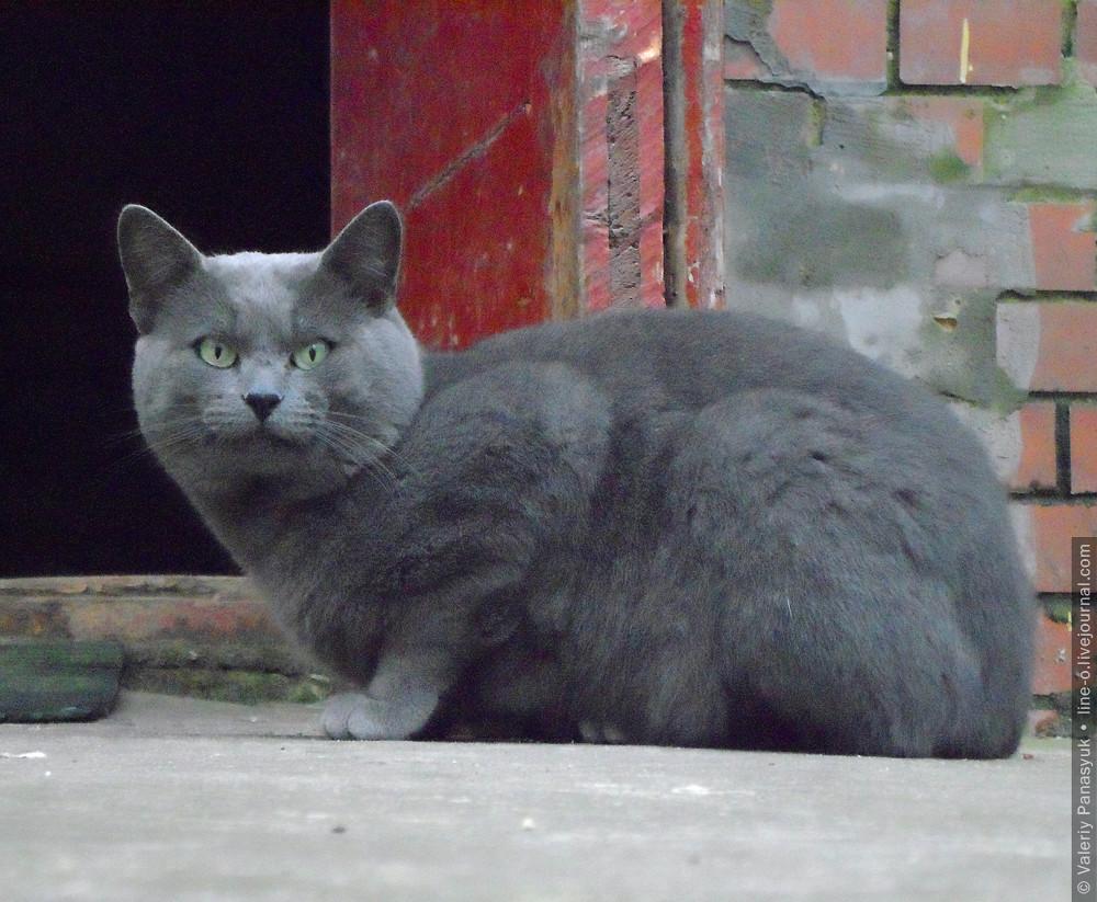 20151116_lutsk_cat_001