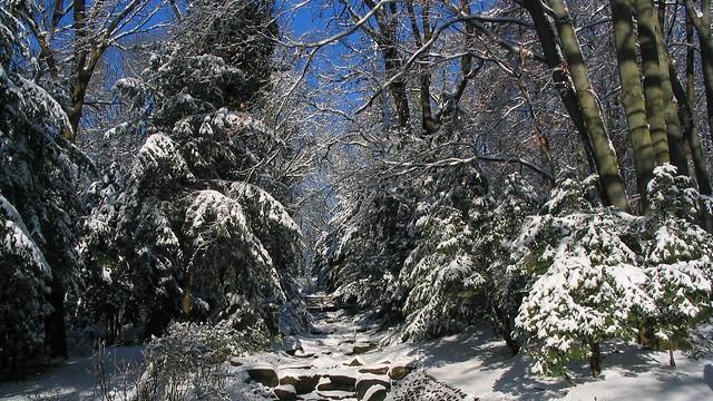 Winter im Steinbergpark, Canon POWERSHOT A70