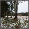 Random snow on our trip up the mountain.  What a wonderful surprise... Totally unexpected... I'd only seen snow once in my life before.  #snow #snowaustralia #barringtontops #newenglandtablelands #nowendoc