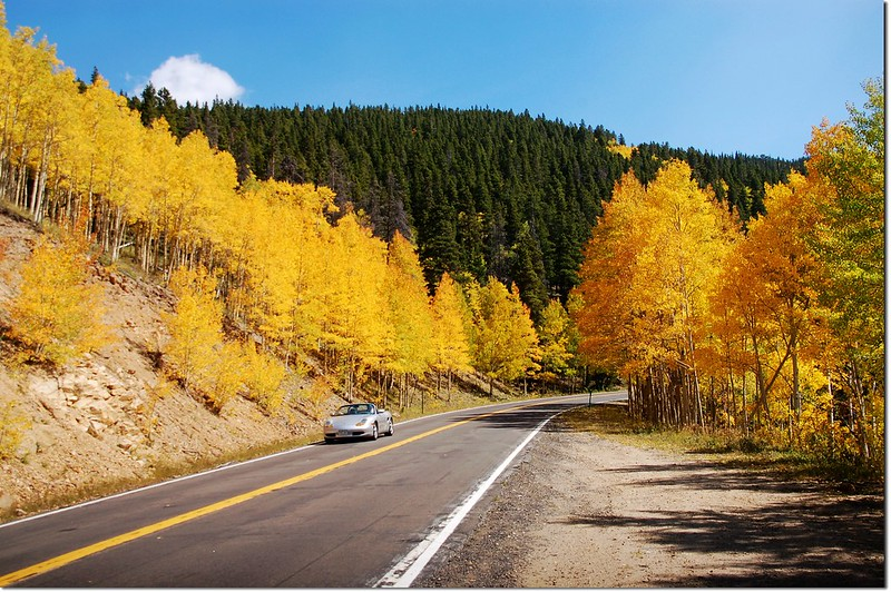 Aspen in Fall, Mount Evans Scenic Byway 7