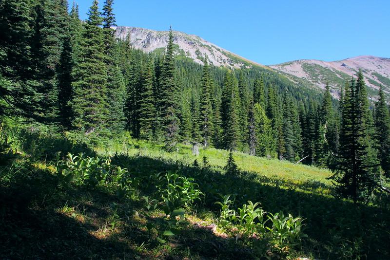 IMG_9520 Glacier Basin Trail