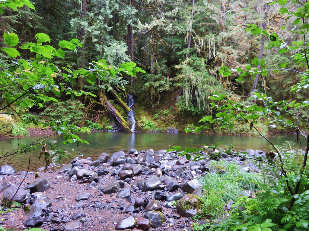 Small creek feeding into the Salmon River