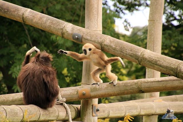 Tierpark Berlin 20.09.2015  0176