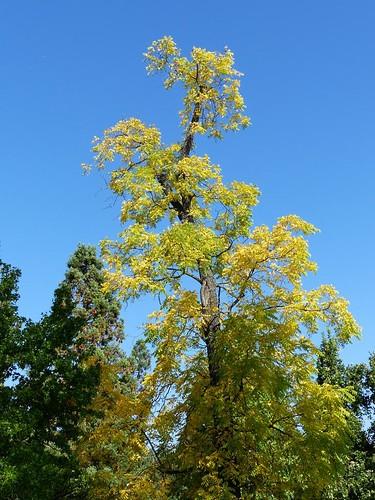 Herbst in der Wilhelma
