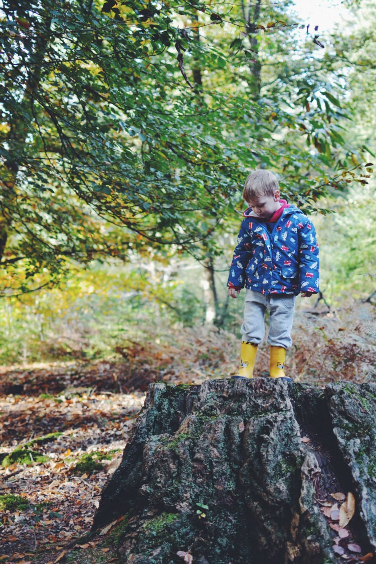 autumn walk 15 stump climbing