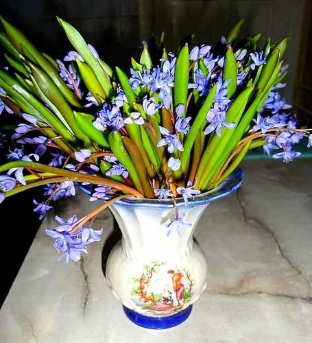 flowers colors beautiful colorful violets bouquet springtime