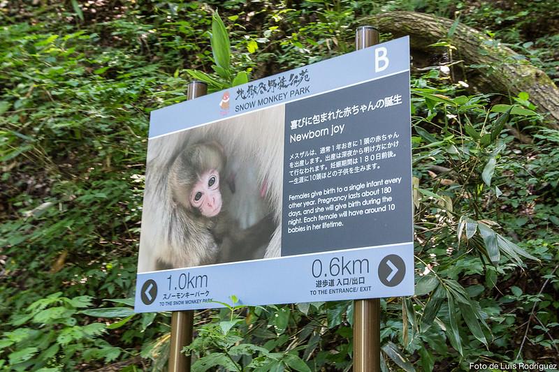 Excursión a Jigokudani-56