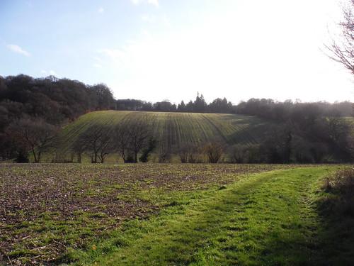 Rolling Fieldscape east of Swan Bottom