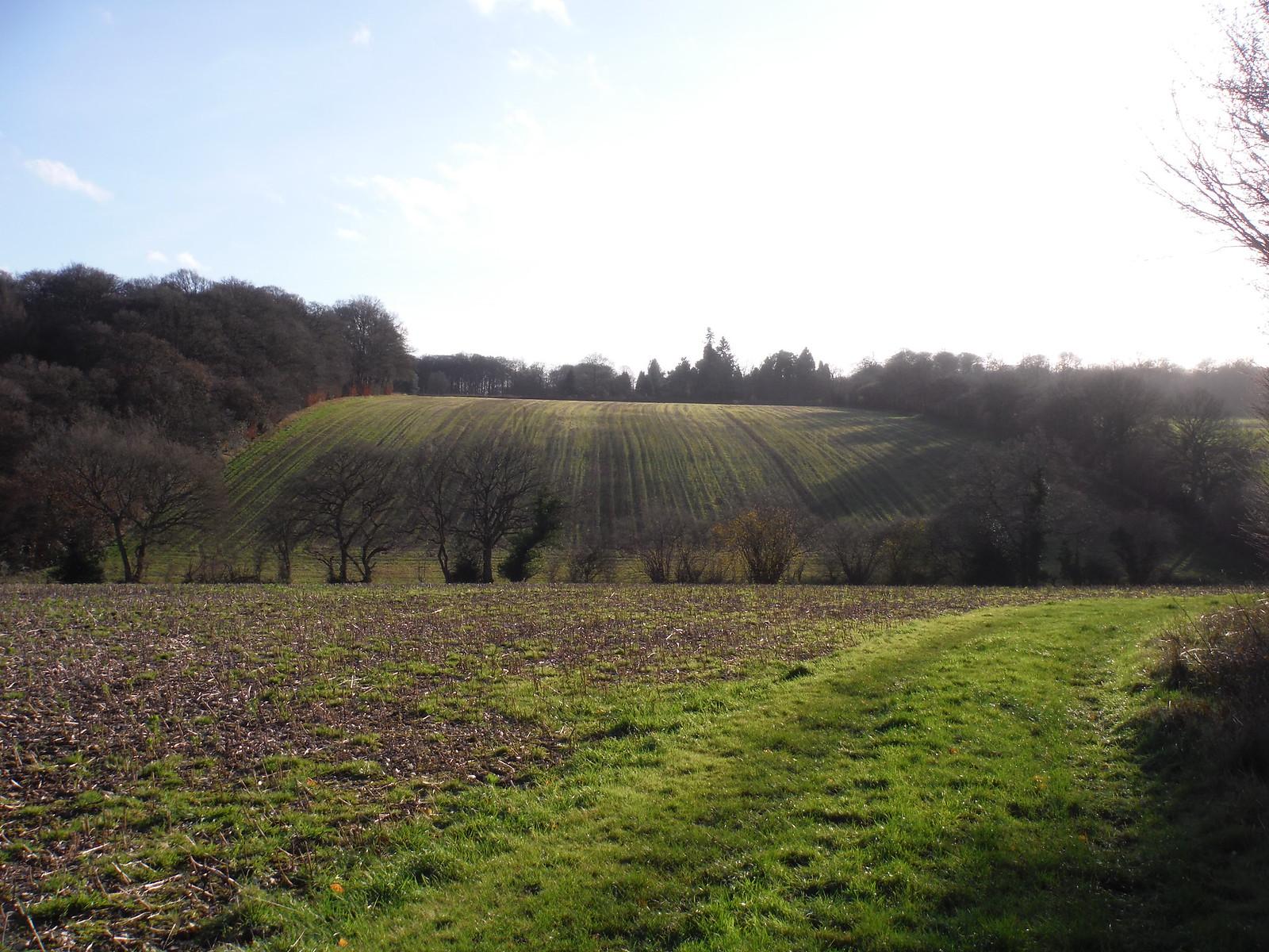 Rolling Fieldscape east of Swan Bottom SWC Walk 140a Wendover to Great Missenden