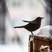 La neige est revenue ... (The snow is back...) by Larch