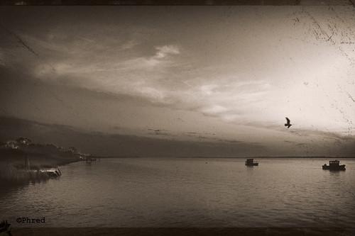 Belle étoile & oiseaux ©Phred-1