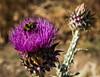 Bee by Daniel Drumond