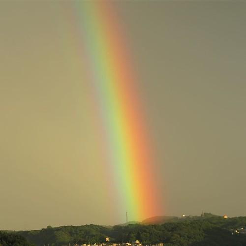 どういうわけか、太く見えた今日の虹。