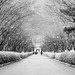 Winter Korean Park by Ibrahim Yussop