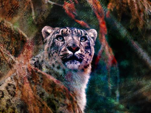 Snow Leopard digital collage