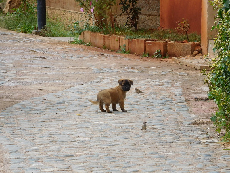 Cute pets and strays