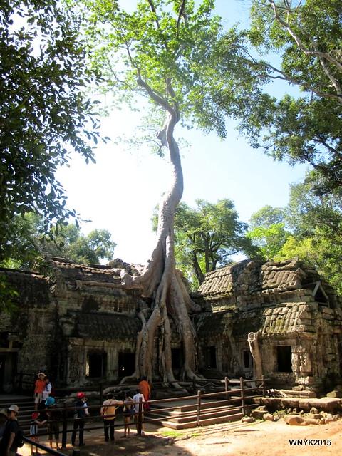 Spung Tree II