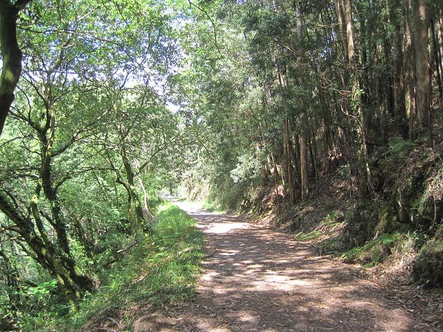 Camino en el área recreativa Central Hidroeléctrica del Tambre