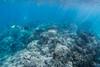 The coral world by Kazuma U