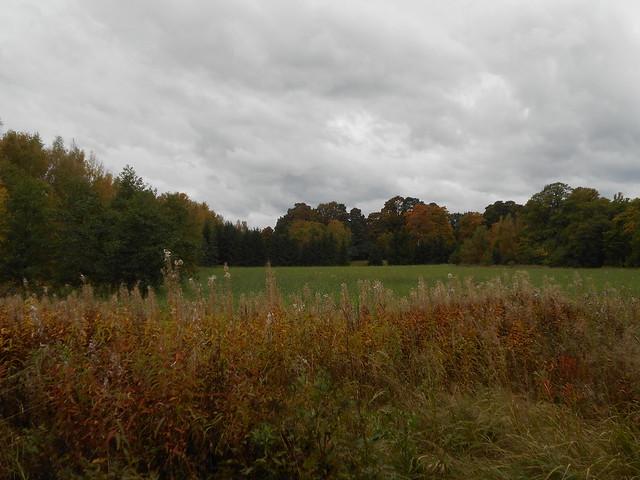 Niittynäkymiä syksyllä; maitohorsmaruskaa metsävaahteraruskan kera 1.10.2015 Espoo Leppävaara