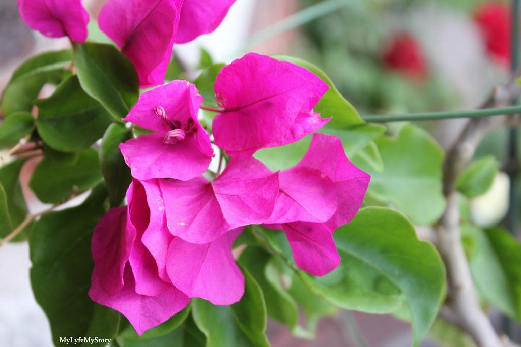 My Garden 2015 (4)