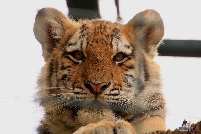 Tierpark Berlin 18.10.2015  0110