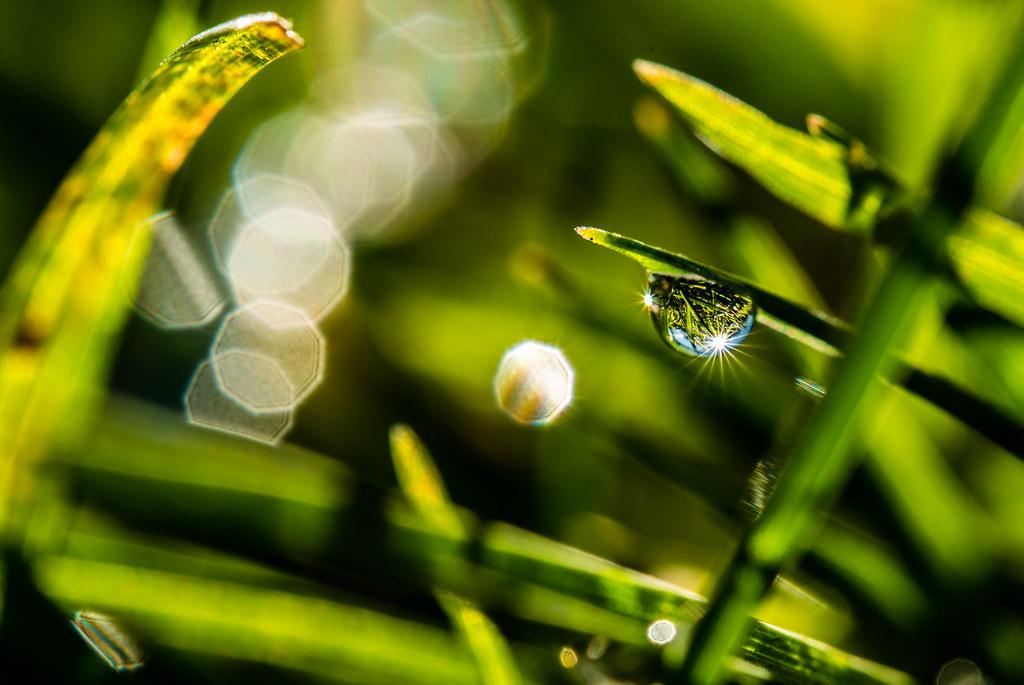 Grass Drop