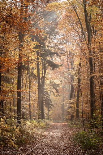 Herbstfarben.jpg