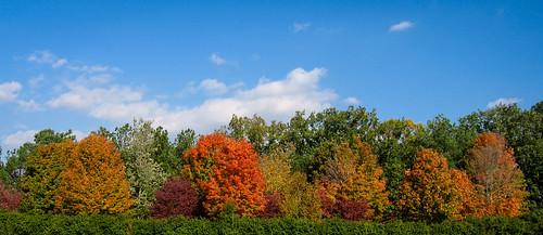 autumn trees mountains color fall colors leaves georgia season us smalltown northgeorgia hiawassee