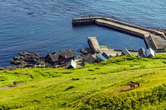 Horses and the harbour at Velbastaður, Faroe Islands