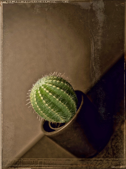 green cactus (Found outside on the balcony)