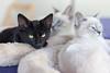 OMG Kittens!