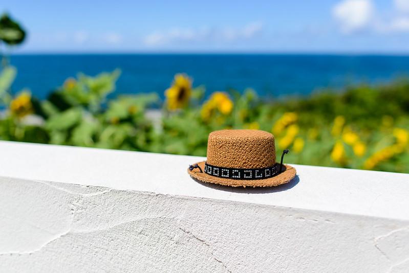 向日葵-鳴り石の浜-2