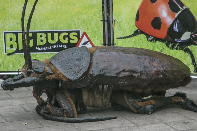 Big Bugs, MAF Santander