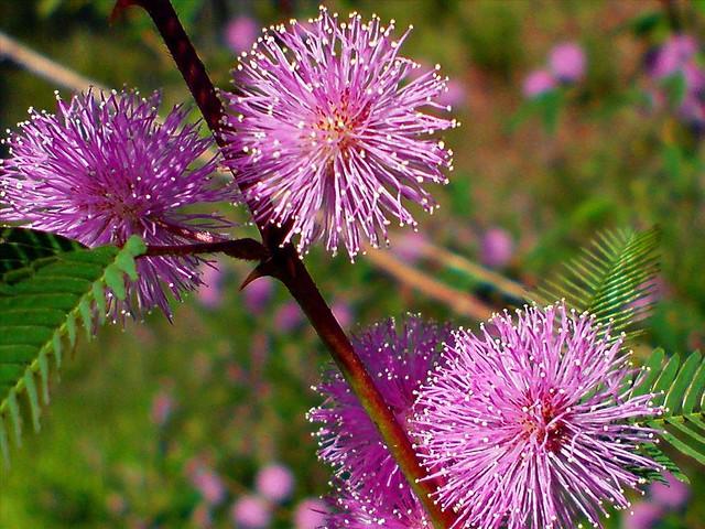Bộ Hình Ảnh Đẹp Nhất Về Những Loài Hoa