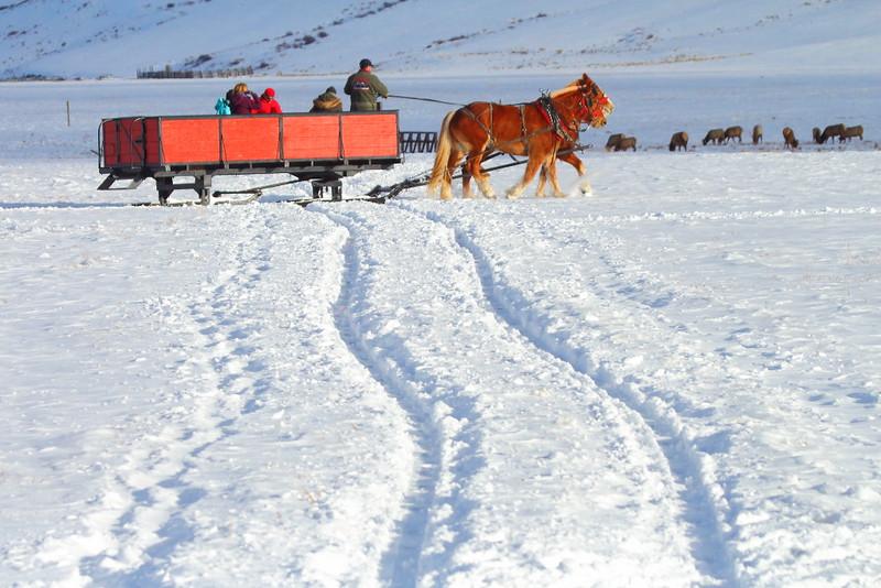 IMG_8955 Sleigh Ride, National Elk Refuge