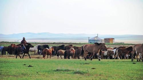 133 Viaje al oeste de Mongolia (24)