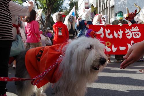 Cat's Halloween Parade in Kagurazaka 2015 28