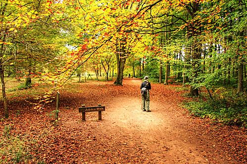 Queenswood - Autumn Glade