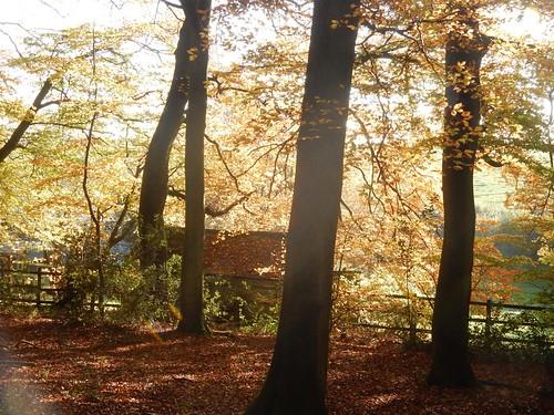More autumn 5
