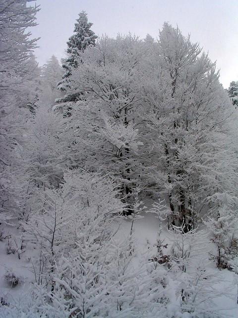 eingeschneite Bäume, Canon POWERSHOT A70