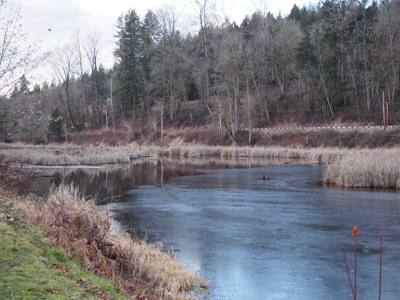 Partially Frozen Pond Near Duvall